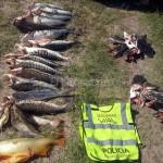 Secuestro Pescado Seguridad Vial