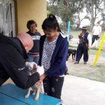 vacunacion-mascotas-barrio-san-francisco-javier