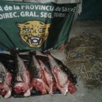 decomisan-pescado-29-11-16