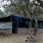 Homicidio Colonia Teresa Zona de Isla